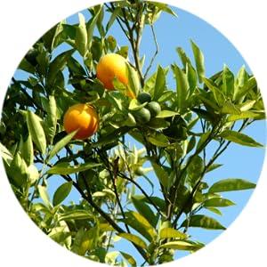 Crema Celulitis Coadyuvante-Adelgace Cosmeteria Verde ...