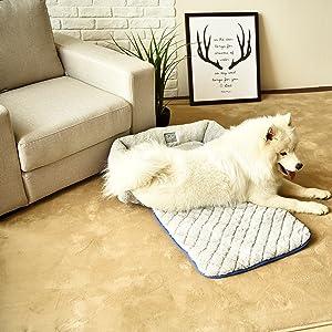 Sofá para perros o gatos en la sala.