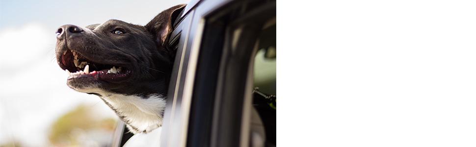 Excelvan Cubierta de Asiento Impermeable de Coche para Mascotas Dise/ño de Visualizaci/ón de Malla,Anti-Ara/ñazos,con Anclajes de Asiento y Respaldo Antideslizante,Ideal para Viajes Cortos y Largos