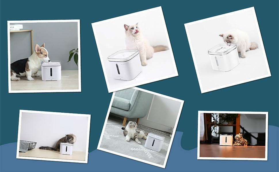PETKIT EVERSWEET Fuente de agua para mascotas 2.0- Pet dispensador automático de agua que necesitas!