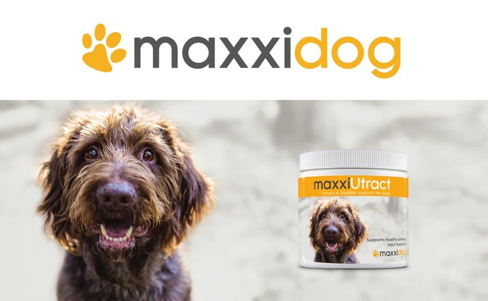 maxxidog - Suplemento Urinario y Vesical para Perros ...