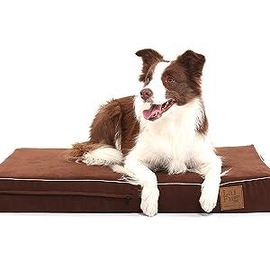 Duradera y larga vida de las cuatro temporadas de la perrera.