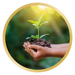Aceite de Ricino Orgánico Vegano 200ml - 100% Puro, Nativo y Prensado en Frío - Nutre la Piel, Cabello, Uñas y Pestañas - Cuidado Hidratante para la ...