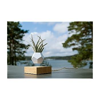 LYFE - La auténtica maceta flotante, original y levitante para ...