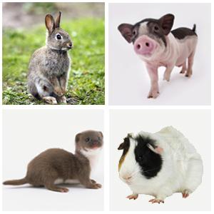 Otras mascotas pequeñas (menos de 8 kg), tal como: