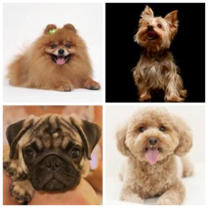 Se servía para un perrito menos de 8 kg, tal como: