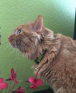 HEBILLA DE SEGURIDAD DE DESCANSO: Los gatos son criaturas curiosas, con una propensión a la investigación de pequeños lugares y árboles trepadores.