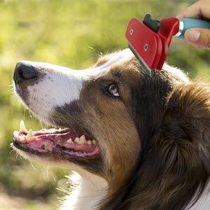 cepillo para perro