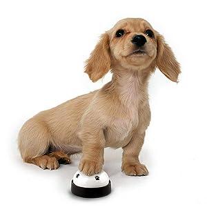 Cuando su perro necesite salir, comuníquese con ellos tocando el timbre, demuéstrelo varias veces para que su mascota entienda su intención repetidamente.