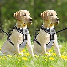 Petacc Arnés Reflectante para Perros Arnés Ajustable para Mascotas ...