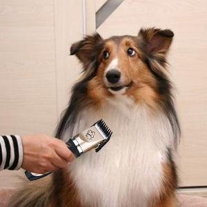 Su tasa de rotación puede llegar a 8200 r/min, pero el ruido sólo alrededor de 65 dB, para ayudar a la mascota se sienta a gusto, No corte de pelo ...