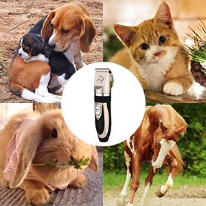 Las principales razones para el cuidado del cabello de mascotas: ✄Para reducir los riesgos de problemas de salud ✄Reduce la carga de parásitos externos en ...