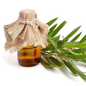 Aceite de árbol de té orgánico