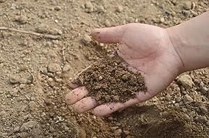 NortemBio Fertiliser no se acumula en el suelo cuando se utiliza, por lo que se puede usar de forma segura y efectiva en cualquier etapa de la vida de la ...
