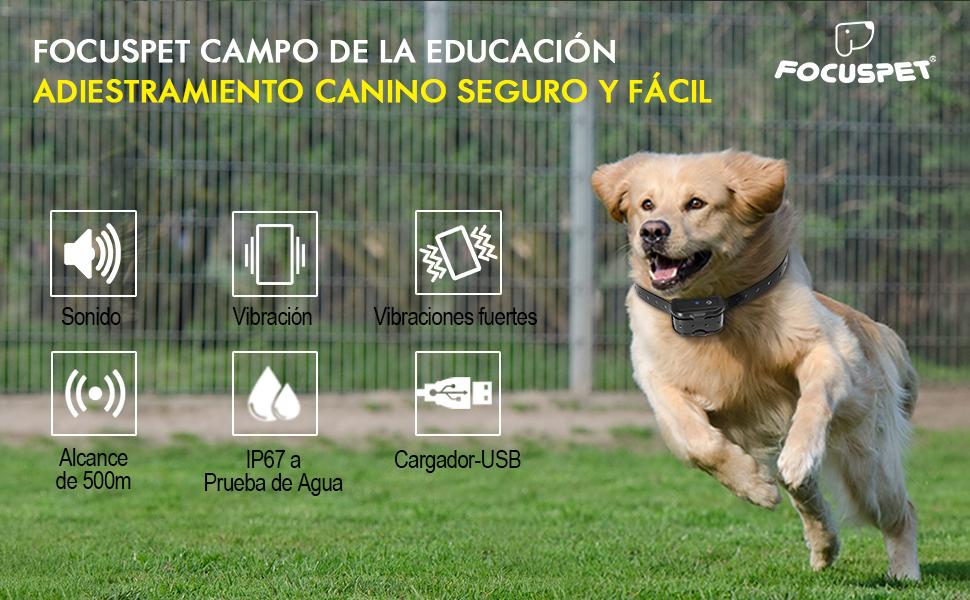 CAMPO DE LA EDUCACIÓN