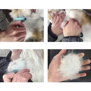 Herramienta de preparación del animal doméstico
