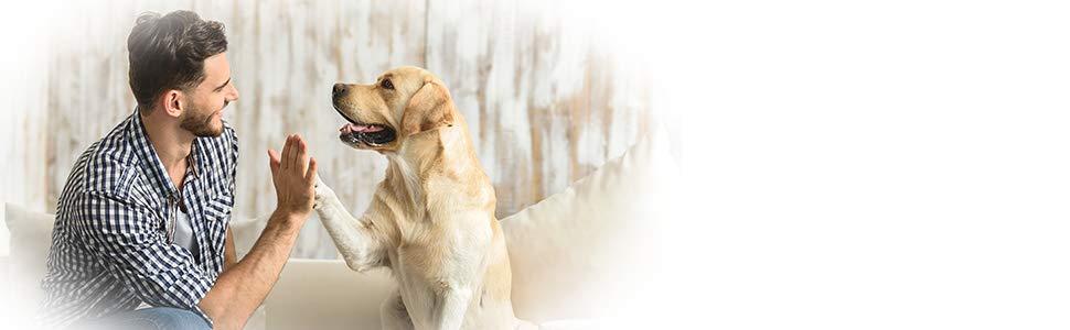 Lavar cola acolchado desechable vestir deslices pipí cintura absorbente cachorro orina vientre band