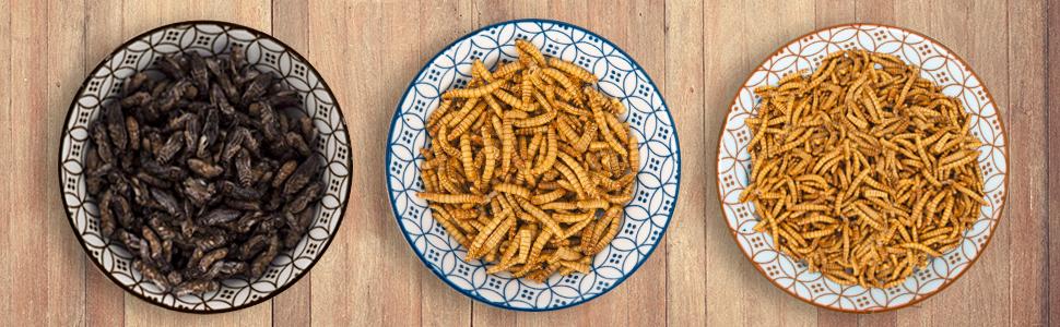 ¡Descubre los dulces insectos!