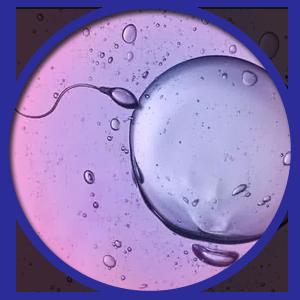 fertility complex