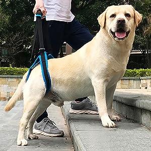 KOBWA - Arnés de Apoyo para Levantamiento de Pesas para Perros ...