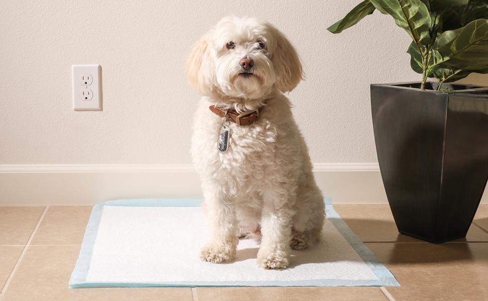 bandeja entrenamiento perros,urinario perros,empapadores,almohadilla suelo,entrenamiento cachorros