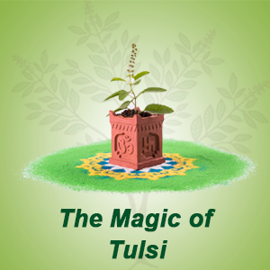 The magic of Tulsi