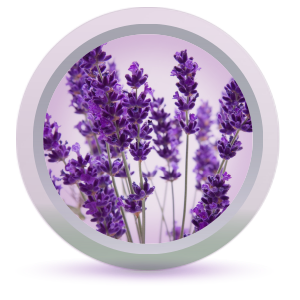 Lavender essential oil in Fresh Look Blackberry Face Wash