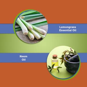 Lemongrass essential oil & Neem Oil