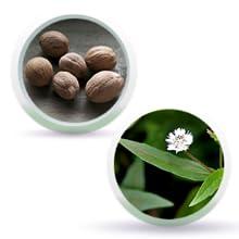 Nutmeg & Keshut Leaves
