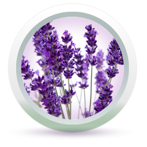 lavender essential oil in Fresh Look Face Wash