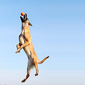 Goofy Tails Hard Dog Squeak Ball Toy