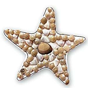 diy fridge magnets, starfish, seashells, do it yourself, craft activity, hobby ideas, hobby