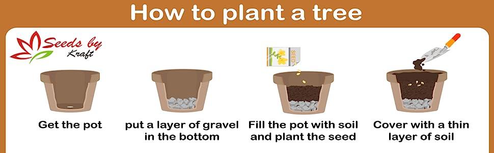 kraft seeds pots