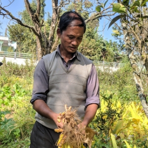 responsible sourcing of Lakadong turmeric from the source