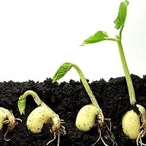 Enriched Soil Mix