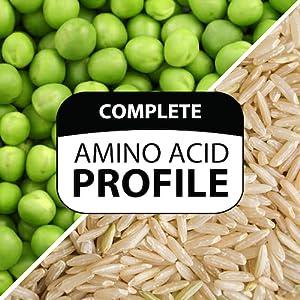 vegan protein powder, plant protein powder, protein powder, plant protein, plant based protein