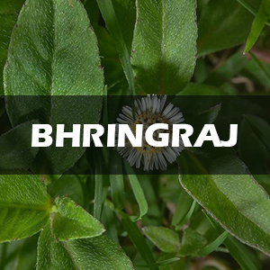 bhringraj oil for hair, mahabhringraj hair oil, bhringraj oil for hair growth, bringha oil, hairgrow