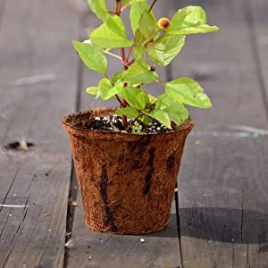 Coir pots,coir seedling cups, coir tray cup, Spanish pots,coco pot,fiber pots,coco basket,coco liner