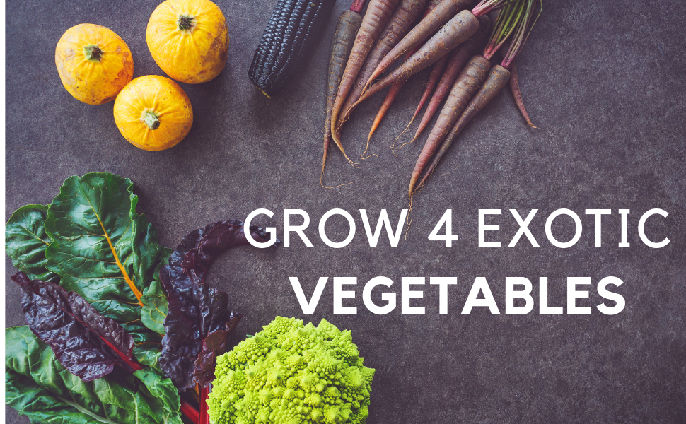 grow 4 exotic vegetables