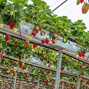 temperature and humidity monitoring in greenhouse