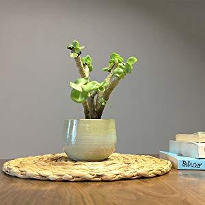 kilofly Natural Water Hyacinth Weave Placemat