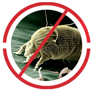 3rd mites