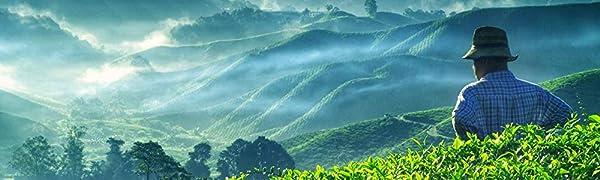 tè artigianale a foglie sfuse