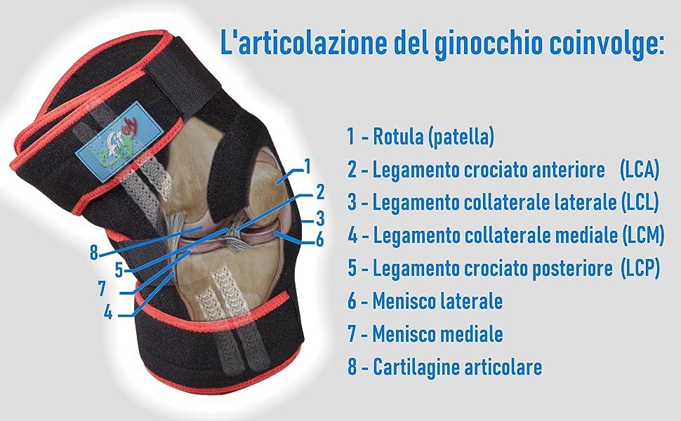 Immagine della ginocchiera ortopedica FitFitaly confrontata con l'anatomia del ginocchio
