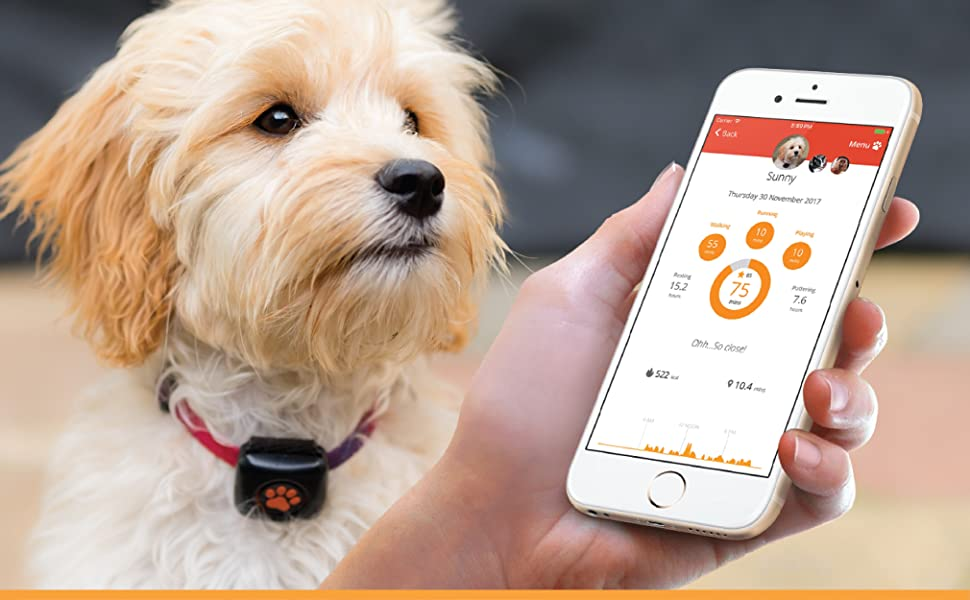 PitPat 2 Dog Activity Monitor & Fitness Tracker Wearable
