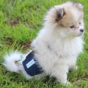 male dog diaper