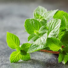 Peppermint oil soothes itchiness and maintains a healthy scalp pH.