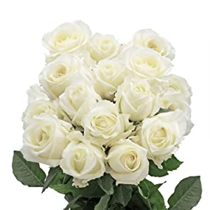 Amazon globalrose 50 fresh cut white roses fresh flowers exquisite solid white color mightylinksfo