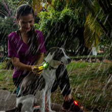 led dog safety light