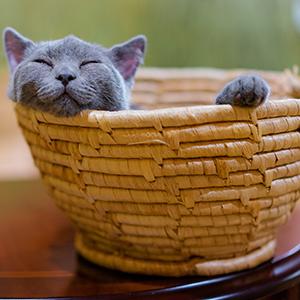 cat basket finding